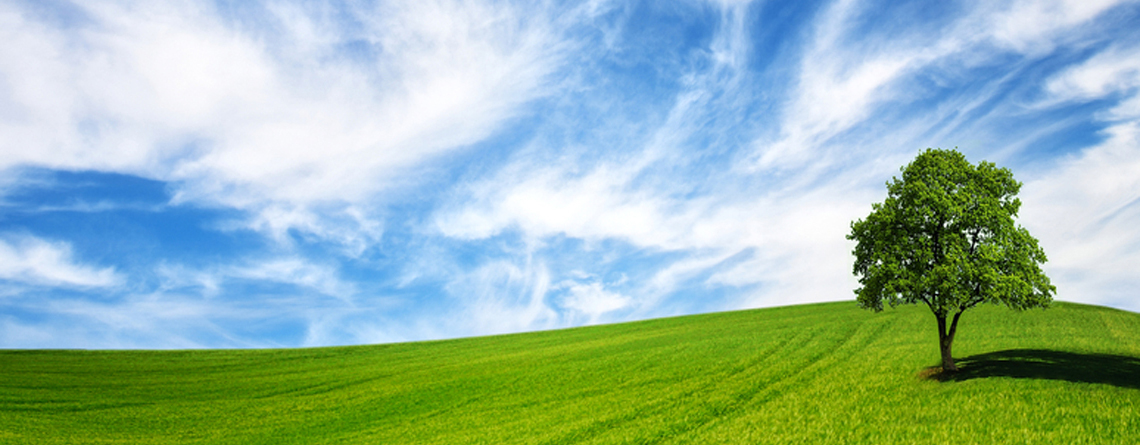 Green tree in a field on blue sky